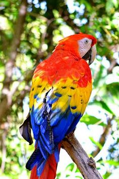 I love parrots. Ours is named Pico