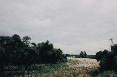 Wide Reed Fields / 野蘆葦 by pk552