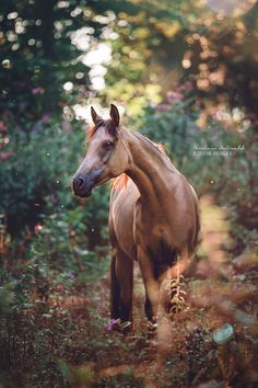 Unusual colored horse.