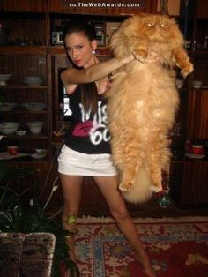The Award For Fat Cats | A Hot Girl Holding A Fat Cat