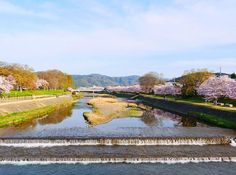 The Kamo River flows through central Kyoto and during this season cherry blossoms line its banks. It's totally possible to soak up some Mother Nature time away from the tourists... 'The earth has music for those who listen' Shakespeare  #japan #kyoto #MeetTheWorld Hotels-live.com via https://www.instagram.com/p/BEifa1mjyjs/ #Flickr