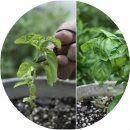 Gardening17 Apart: Gardening