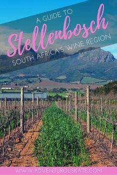 The ultimate guide to exploring Stellenbosch, the gateway to South Africa's incredible wine region. Things to do in town, wineries and vineyards to visit, top restaurants and food experiences, unmissable wine pairings, and incredible day trips. Travel in South Africa. | Adventurous Kate: Solo Female Travel Blog #Stellenbosch #SouthAfrica