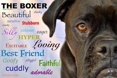 The Upbeat Boxer Dog Exercise Needs Boxer Dogs Facts, Boxer Puppies, Boxer And Baby, Boxer Love, I Love Dogs, Puppy Love, Der Boxer, Cesar Millan, Dog Stories