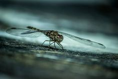 Dragonfly Photo by Nikhil (Mace) — National Geographic Your Shot