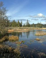 BEAVER CREEK STATE   NATURAL AREA  near Waldport, Oregon. Bring your binoculars, boots or small boat to Beaver Creek. This new park offers paddling, bird watching, walks in the marshland and hiking in upland meadows. Put in your kayak or canoe at the Ona Beach launch.