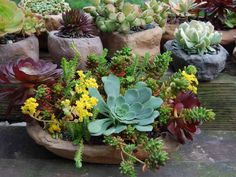 Start Here Before Growing Succulents - See more at: http://worldofsucculents.com/start-here-before-growing-succulents