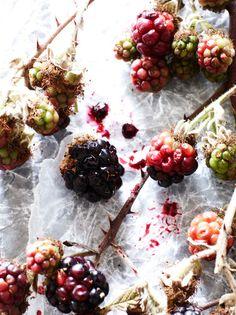 Essence of wine by Vinography: blackberries!
