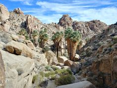 Joshua Tree National Park, National Parks, Route 66 Road Trip, Oasis, Grand Canyon, Travel Inspiration, Palm, The Incredibles, Vacation