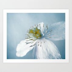 Clematis Blue Art Print by Ally Coxon - $20.00