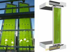 Réacteurs a algues.