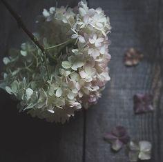 hydrangea lover