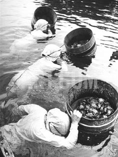 Three Female Mikimoto Pearl Divers with Buckets as They Prepare to Dive Down 20Ft. for Oysters Premium Photographic Print by Alfred Eisenstaedt at Art.com