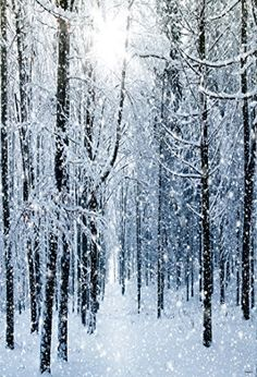 Winter forest wallpaper winter wallpaper in 2019 winter . Winter Wonderland Wallpaper, Wallpaper Winter, Wallpaper Free, Forest Wallpaper, Christmas Wallpaper, Wallpaper Ideas, Dora Wallpaper, Winter Wallpapers, Tree Wallpaper