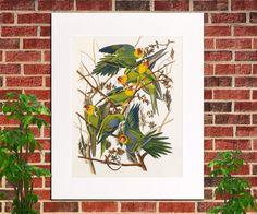 ❦❃ Carolina Parrot Print Birds Poster Wildlife Art Vintage Carolina Parro... Be http://etsy.me/2w73er5