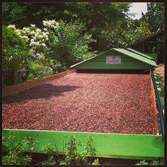 Secadero de cacao. El día de las mariposas. Hermanas Mirabal. República Dominicana