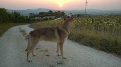 """Guardando il tramonto con """"Inheritance di Fossombrone"""" - foto di Verio Cardoni   #WeAreFossombrone #Saarloos"""