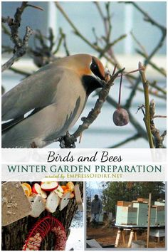 When it comes to getting your garden ready for the winter, don't tidy up too much! Birds, bees, other insects, and wildlife all depend on garden debris for food sources and habitat. Also see more tips on what you can do for a thriving garden all year round.