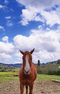 Horse in the Tuscan country - null