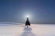 Include The Sun – Hokkaido's Trees And Hill.   Bored Panda