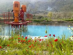 Spring Flower near Injection Pool, Aydin, Turkey. – Destegul Solaroglu