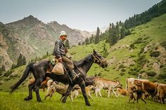 Best of photos Kyrgyzstan - Nomad 1