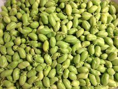 fresh garbonzo beans from the farm