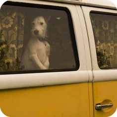 It is illegal to leave your pet in a  hot vehicle. You can be FINED and have your window broken at your cost.