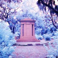 Travel Pictures : Georgia and Charleston South Carolina