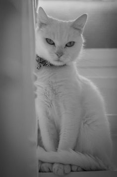 What a Pretty Kitty - Click to see loads of great pictures of cats and kittens to brighten your day.