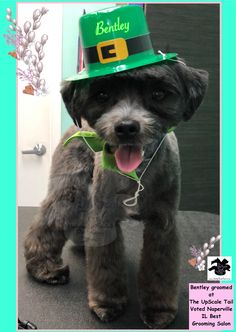 15 best st patricks day pet grooming at the upscale tail all breed holiday grooming at the upscale tail voted naperville il pet best grooming solutioingenieria Image collections