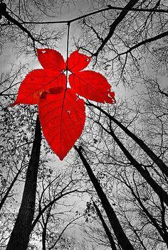 ✯ Last Leaf of November - Taken at Culver State Park, Missouri
