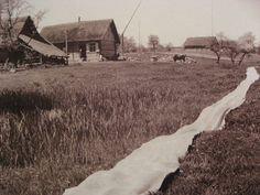 Linen bleaching in the sun in a Lithuanian village. Photo by Balys Buracas, beginning of the XX century