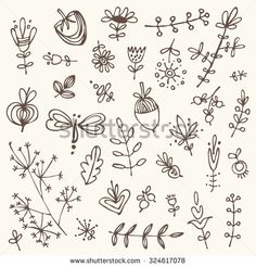 Vector set: floral elements. hand drawn