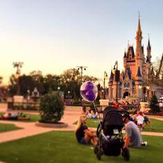 The new gardens at Magic Kingdom @waltdisneyworld are simply wonderful. Great addition #Disney #waltdisneyworld #wdw