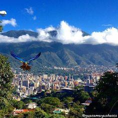 Caracas Siguenos en IG:@venezuela_es_mi_pais Foto: @guacamayasdeccs #venezuela #naturaleza #nature #verde #venezolanosendoral #mountains #montaña #caracas #venezolanosenpanamá #venezolanosenelexterior #venezolanosenespaña