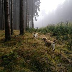Photo And Video, Animals, Instagram, Animales, Animaux, Animal, Animais
