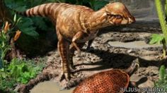 Dinosaurus berkepala tebal ditemukan