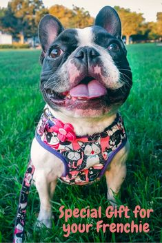 Today we're evaluating the best damn french bulldog harness cash can purchase. Frenchies are infamous leash-pullers and a great harness is the . Bulldog Puppies, Dogs And Puppies, French Bulldog Harness, Group Of Dogs, Pink Dog, Dog Leash, Dog Accessories, Beautiful Dogs, Dog Design