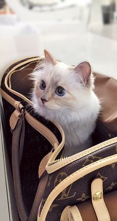 Choupette Lagerfeld: possibly the world's most pampered pet | #Cats