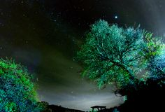 Jupiter over the trees by Marco T.