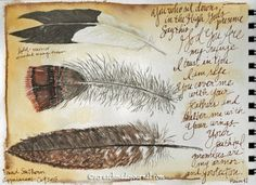Identifying & Painting Feathers