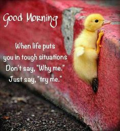 Good Day Quotes: Good morning - Quotes Sayings Good Day Quotes, Daily Quotes, Quote Of The Day, Life Quotes, Quotes Sahabat, Lesson Quotes, Night Quotes, People Quotes, Attitude Quotes