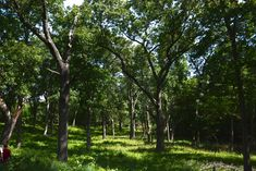 Luckey's Woodland on 1200 acres of nature preserve connected to Goshen College in Indiana. Photo: Merry Lea Environmental Learning Center. Goshen College, Learning Centers, Preserve, Acre, Indiana, Woodland, Environment, Merry, Plants