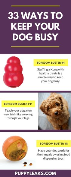 Looking for some simple ways to keep your dog busy? Here's 33 indoor boredom busters for dogs.