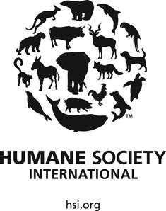 HSI is at the forefront of a global campaign to bring life sciences research into the century and see cruel and outdated animal tests relegated to the history books -- forever. Help HSI end animal testing today! Stop Animal Cruelty, Animal Testing, Animal Rescue, Humane Society, Baby Seal, Street Dogs, Animal Protection, Puppy Mills, Animal Welfare