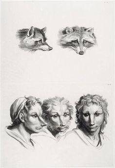 André Le Grand, after Charles Le Brun | Deux têtes de renard et trois têtes d'hommes en relation avec le renard | Images d'Art