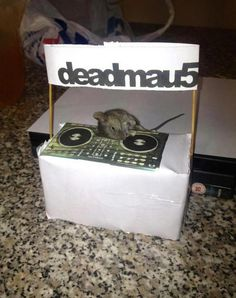 The Real Deadmau5