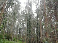 North Spain Forests
