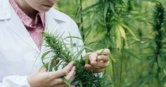 Marijuana Research Supports Its Safety and Benefits. Recent research proves the health benefits and safety of marijuana, and that it is much safer than prescription drugs.